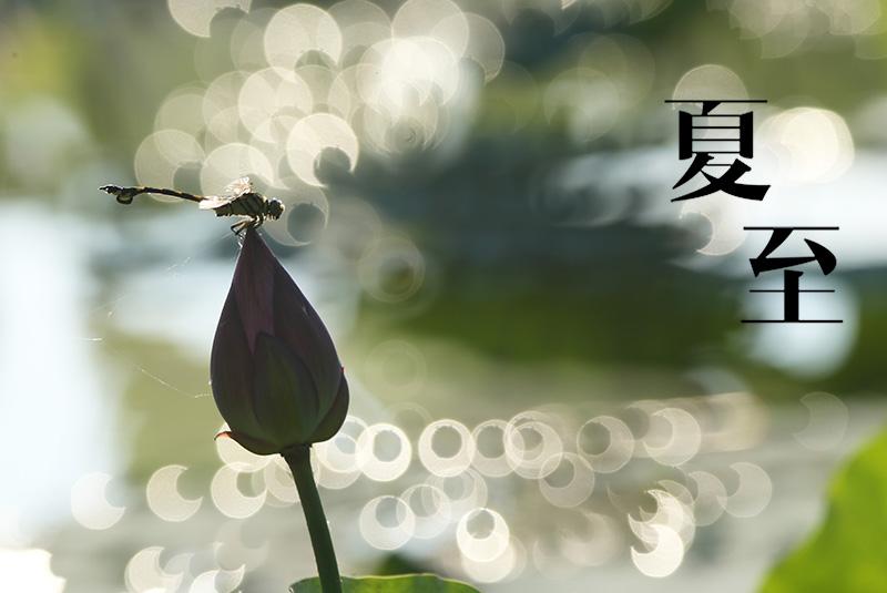 #(生态)(1)夏至荷塘