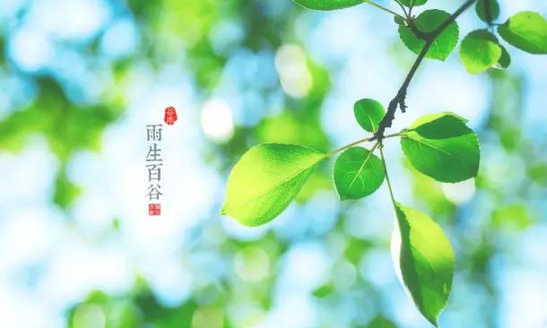 二十四节气|谷雨 : 春欲远,夏未至